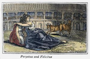 Perpetua and the wild cows